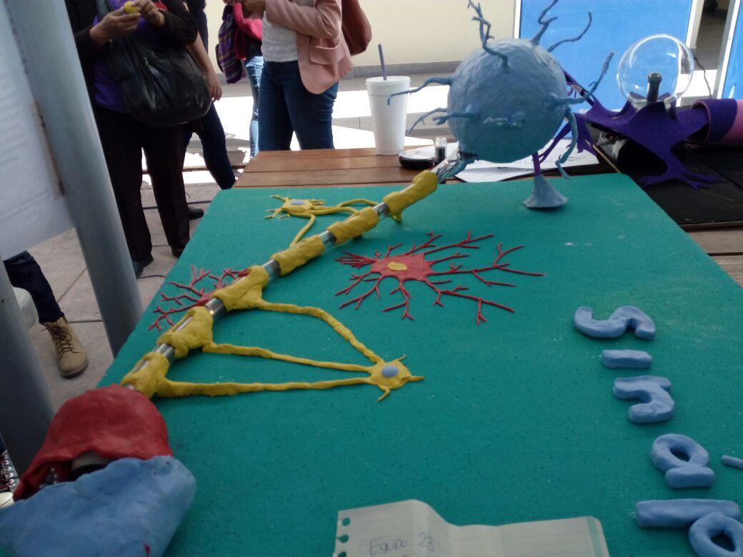 Modelo plástico de una neurona