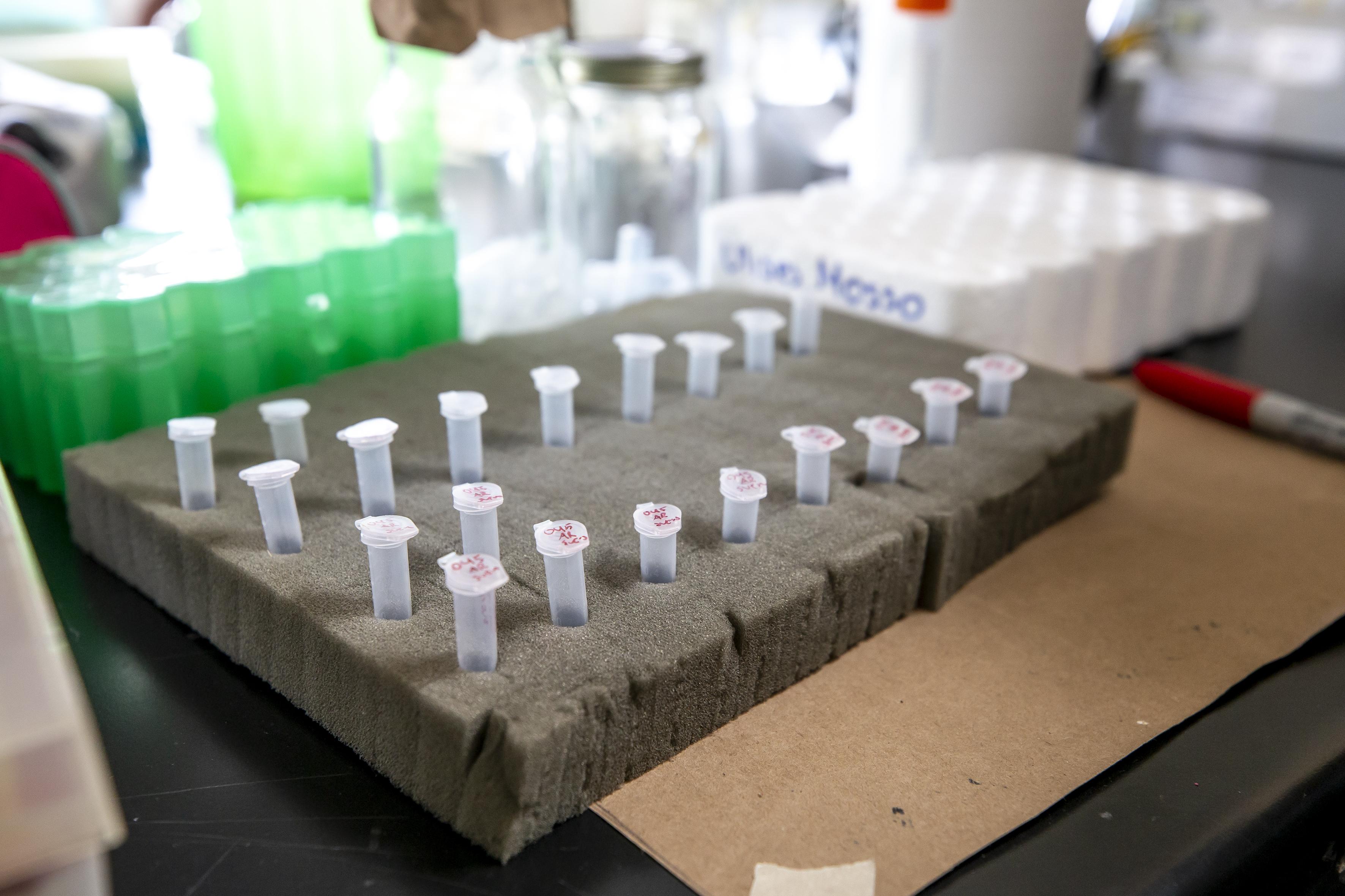 imagen de tubos de ensayo del laboratorio